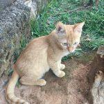 【ルワンダ事件簿】平和な農村で立てこもり事件発生!?人質…いや猫質をとって金銭を要求された話
