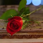 『バチェラー・ジャパン』第12話(最終話)の感想・ネタバレ~遂に運命の女性が決定。たった1つのバラを手にするのは…?~